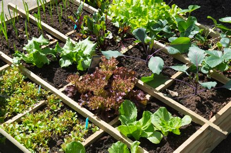 Food At Square Garden by Square Foot Gardening The Ultimate How To Guide Loyalgardener
