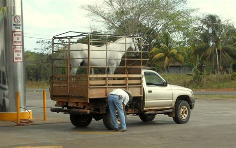 transport  costa rica page  trucks   transport