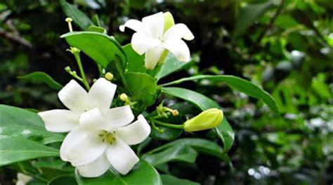 jenis tanaman hias bunga kembang taman