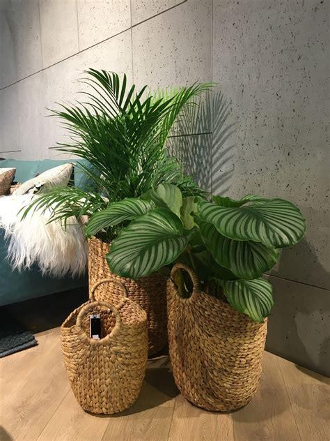Plante Design D Interieur by Images Gratuites Plante Bois Int 233 Rieur Vert Meubles