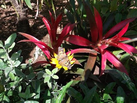 Butterfly Garden Az by Butterfly Garden And Beautiful Plants Picture Of