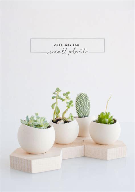 cute plants cute idea for small plants 79 ideas