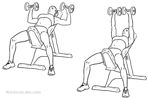 incline bench press dumbbells incline dumbbell bench press illustrated exercise guide workoutlabs