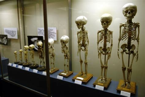 10 Obscure Museums To Visit In by Museums Ny Daily News