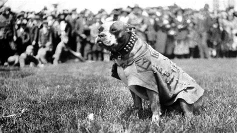 Sgt Stubby Most Decorated War Schools Medals And Awards