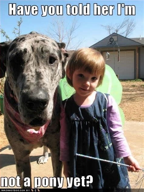 Great Funny Memes - 12 best great dane memes of all time