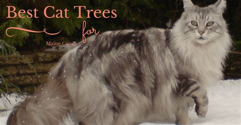 Best Cat Trees for Maine Coons   Upgrade Your Cat