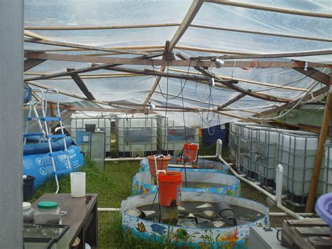 backyard systems home aquaponics considerations for backyard aquaponics