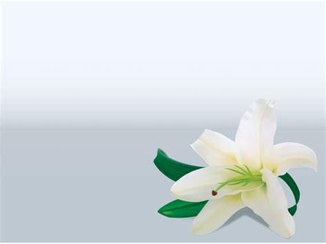 Lily Flower Powerpoint Templates Flowers Green Yellow Free Ppt Backgrounds And Templates Flower Powerpoint Template
