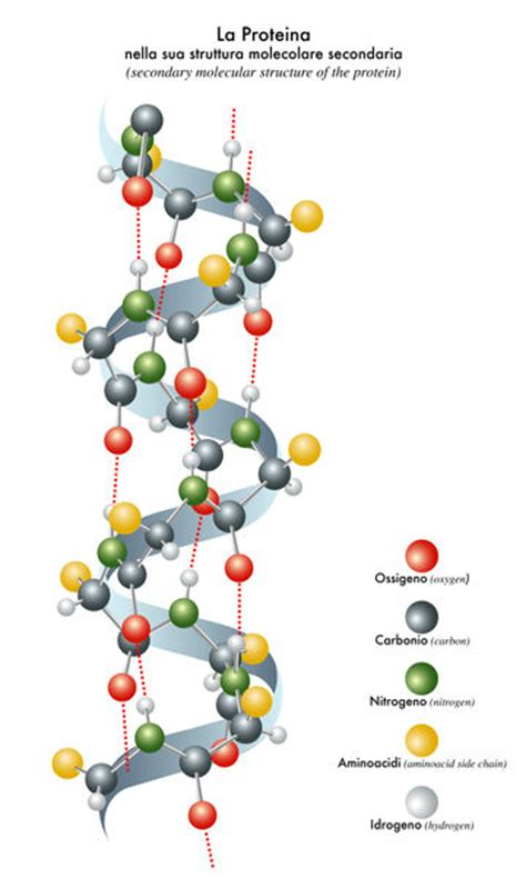 protein biology protein structure biology encyclopedia cells