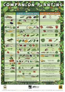 Fall Garden Planting Schedule - companion planting chart