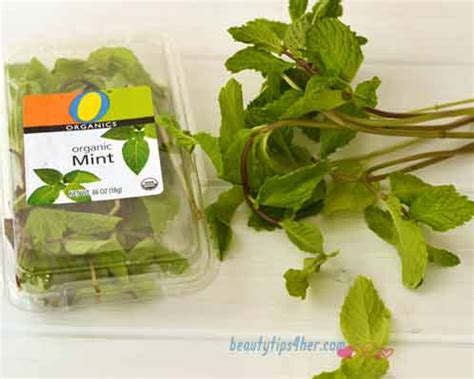 Detox Cleanse With Mint Leaves by Cleanse Starting On A Watermelon Detox Diet