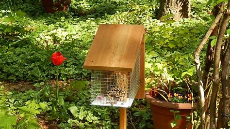 Flies In Backyard Build Your Own Mason Bee House Boing Boing