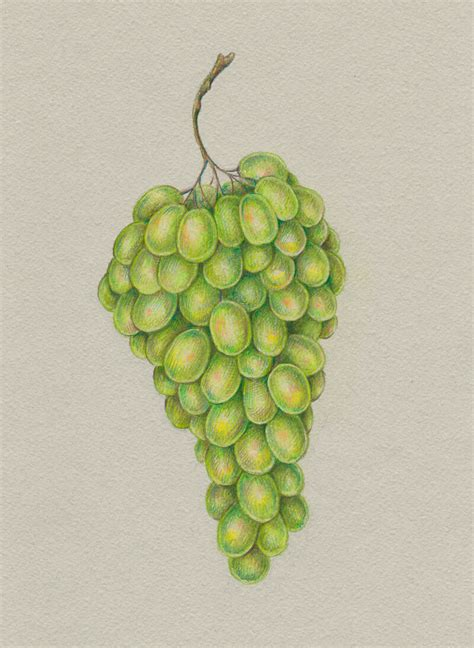 how to draw with colored pencils how to draw grapes with colored pencils