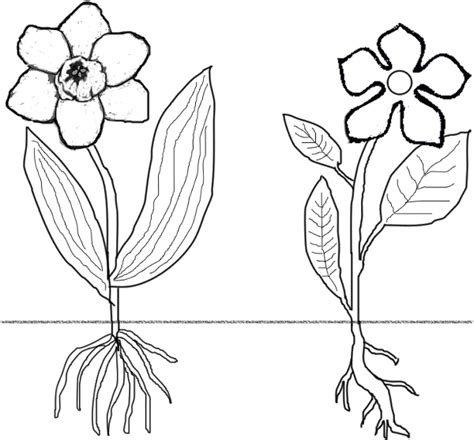 free parts of flower coloring pages