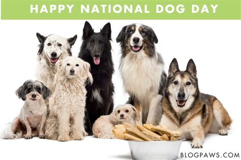 when is national puppy day national day humane society of charles county