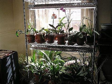 tips  growing orchids  lights indoors infobarrel