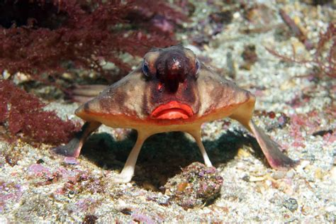 Blue Kitchen Islands galapagos islands darwin inspiration pre tend be curious