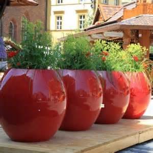 Grande Plante Exterieur En Pot