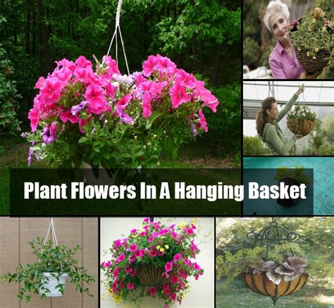 the best way to plant flowers in a hanging basket diycozyworld home improvement and garden