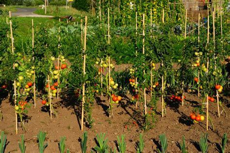 serre da terrazzo obi pali di sostegno per pomodori idee green