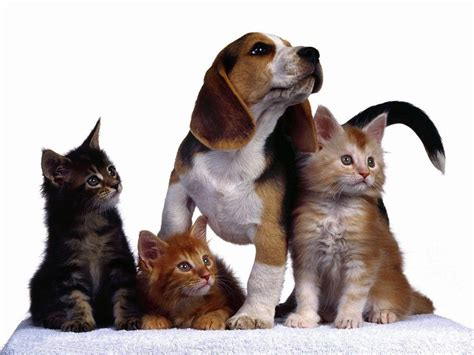 wallpaper cat and dog hd cat and dog wallpapers wallpaper cave