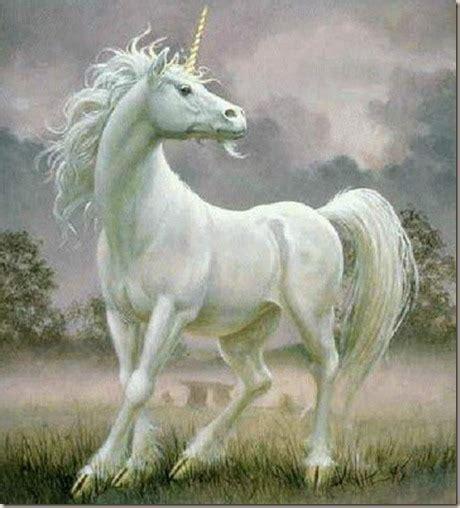 unicornios en imagenes unicornios en la biblia soy ateo