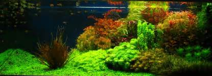 Aquascaping Stones My Planted Tank Old Dutch Style