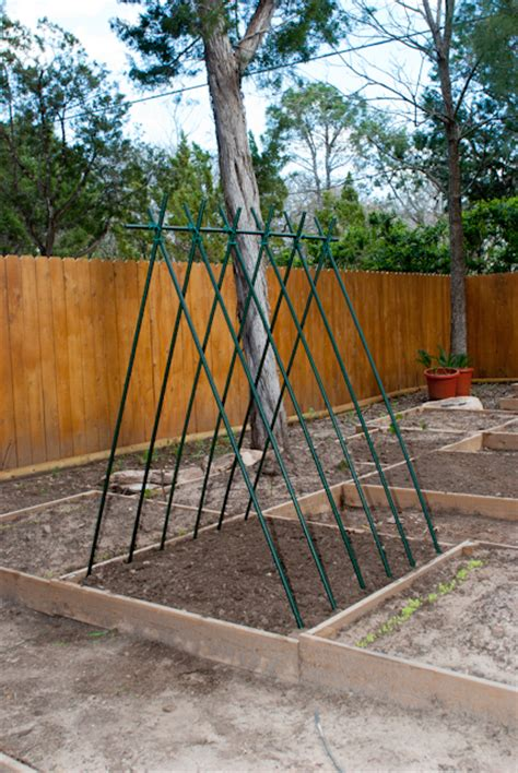 Gardeners Supply Bean Tower Build A Pole Bean Tower Gardening In Rock