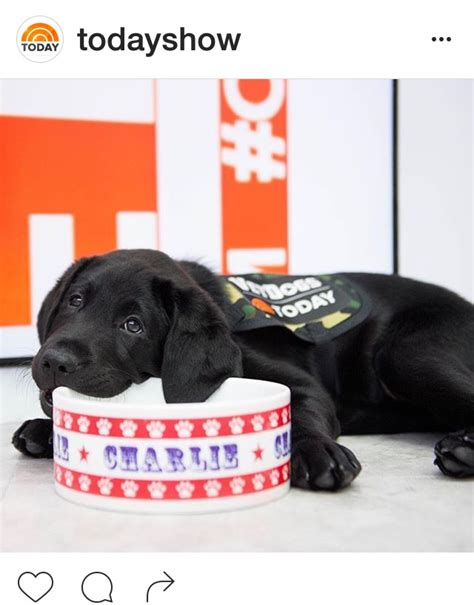 today show puppy 187 new puppy studio notes