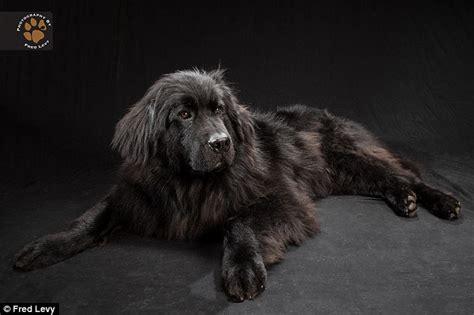Cruelty Unjust black dogs great personalities stunning photo