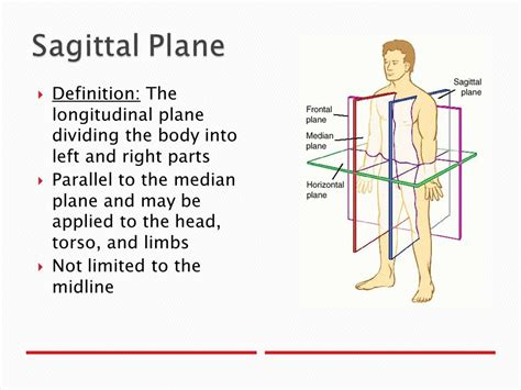 sagittal section definition anatomical planes and directions ppt video online download
