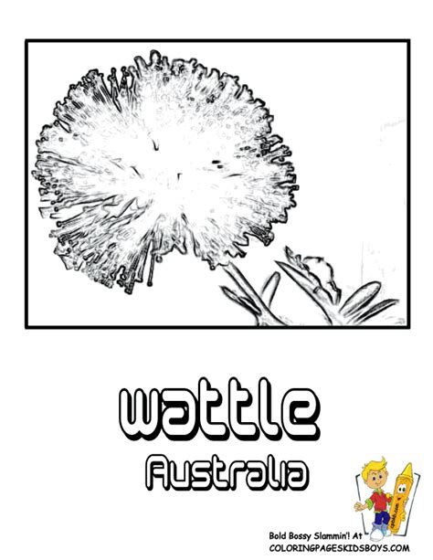 coloring pages of australian flowers worlds flowers coloring flower of nations argentina