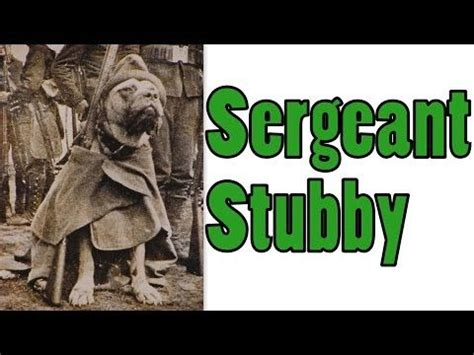 Sergeant Stubby Schools Best 20 Sergeant Stubby Ideas On War Dogs When Is Anzac Day And Dogs