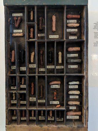 icelandic phallological museum (reykjavik) all you need