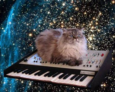 keyboard cat is dead general discussion know your meme