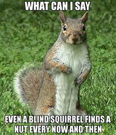 what can i say even a blind squirrel finds a nut every now