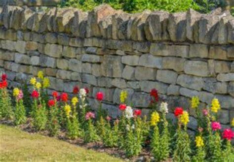 Garten Sichtschutz Stein 292 steinmauer als sichtschutz 187 materialien und mehr