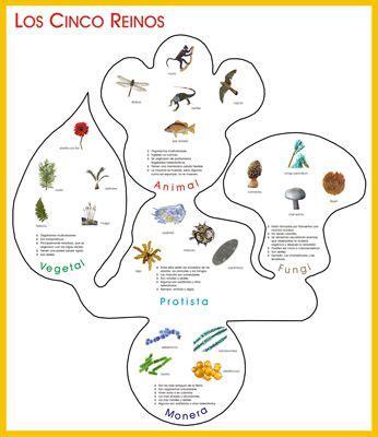 cartelón los 5 reinos hoja huella hongo.jpg | arte para