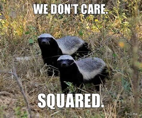 Honey Badger Don T Care Meme - honey badger don t care animal instincts pinterest