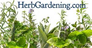 herbgardening com herb growing resources