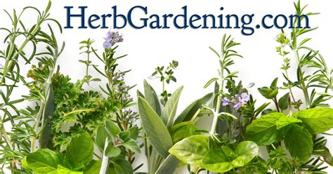 Growing Herbs | how to grow herbs in hydroponics herb gardening guide