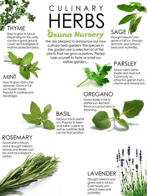 herb grower s sheet herb guide osuna nursery