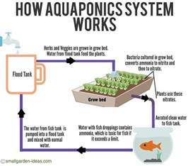Aquaponic Grow Beds Aquaponics Systems For Indoor Gardening Small Garden Ideas