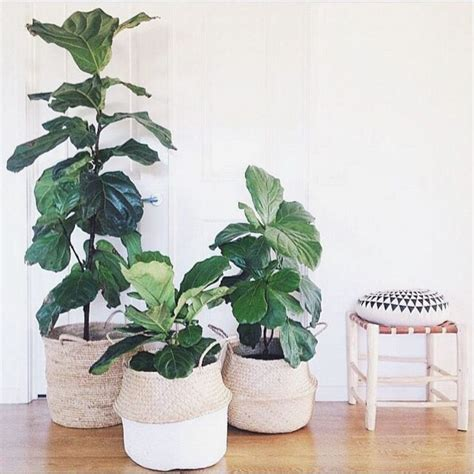 in door plants pot three four plants argements video best 25 indoor plant decor ideas on pinterest plant