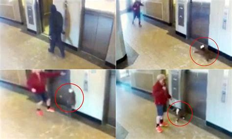 elevator death heroic man saves dog from terrible elevator accident