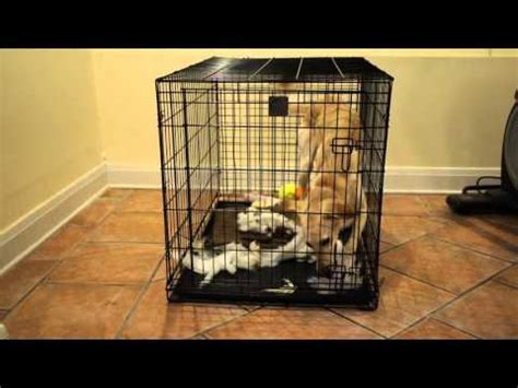 how to crate a with severe separation anxiety saluki has severe separation anxiety in crate