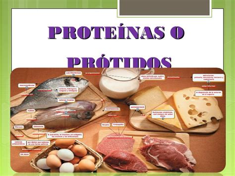proteinas o protidos prote 205 nas o pr 211 tidos