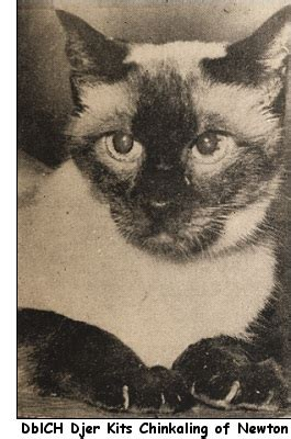 We Are The Cat Excerpt by The Way We Were Excerpts From The 1960 Cfa Yearbook Part 6