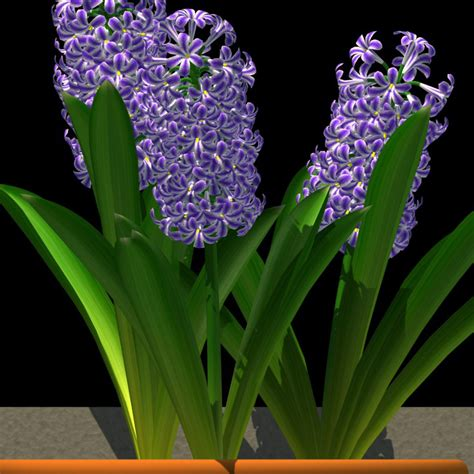 Design Library by Onyxflower Library Hyacinthus Orientalis